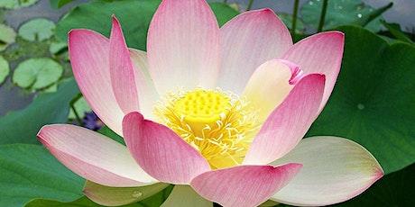 Raja Yoga Meditation tickets