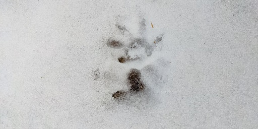 Discovering the World of Mindful Animal Tracking