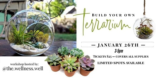 + build your own terrarium +