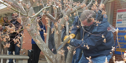 Think Green Thursday: Pruning Shrubs and Trees