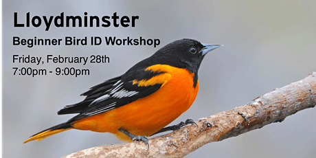Lloydminster - Beginner Bird ID Workshop tickets
