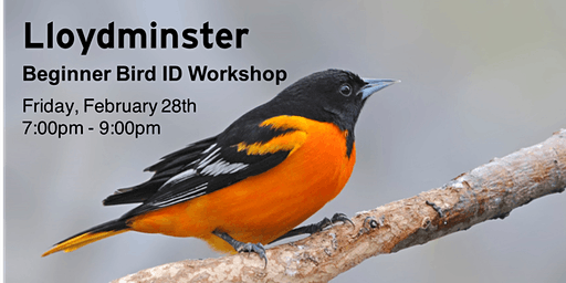 Lloydminster - Beginner Bird ID Workshop