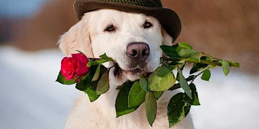 Valentines Dog Party