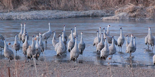 2020 Sandhill Crane North Platte River Blind
