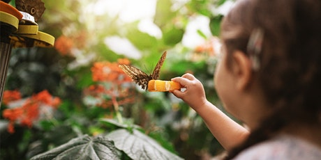 CAA Day at the Butterfly Conservatory tickets