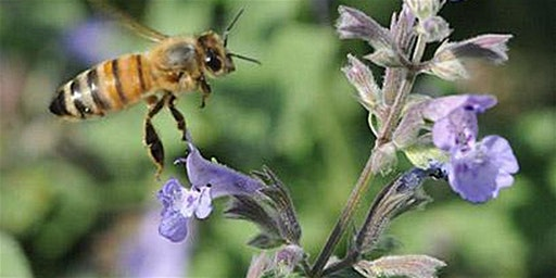 Native Pollinators & Mason Bee Lodge Workshop
