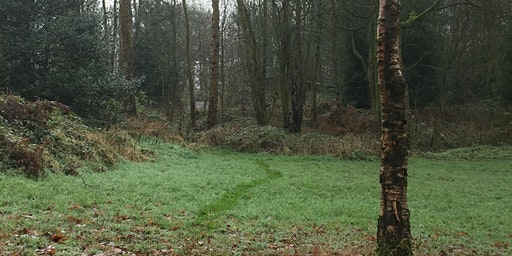 Winter Forest Bathing Experience