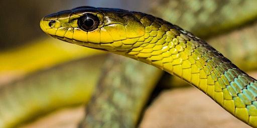 Penrith Reptile Expo & Family Fun Day 2020