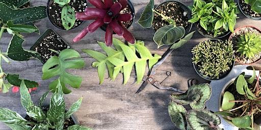 Plant Nerdist: Propagation