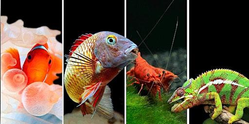17éme salon de l'aquariophilie et terrariophilie d'Antibes (06)