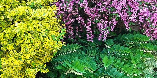 Shrubs for Smaller Gardens