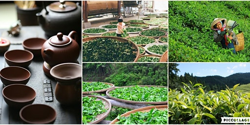 Tea Origin