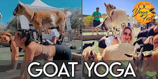 Goat Yoga  @ OC Yoga Festival
