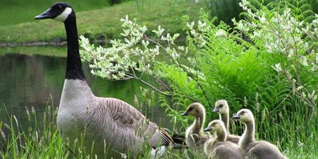 Geese & People: Protection and Policy tickets