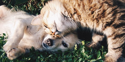 Pet Safety With Houseplants