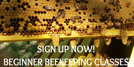 2-Day Beginner Beekeeping Class - March 7-8, 2020 tickets