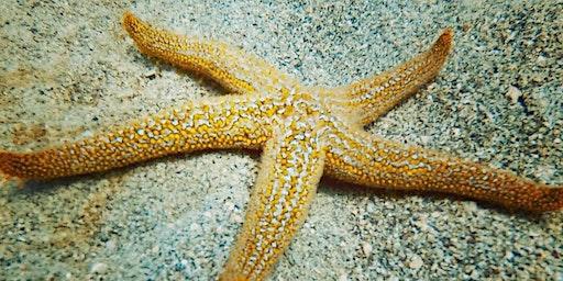 East Coast Diving - Four Diver Limit