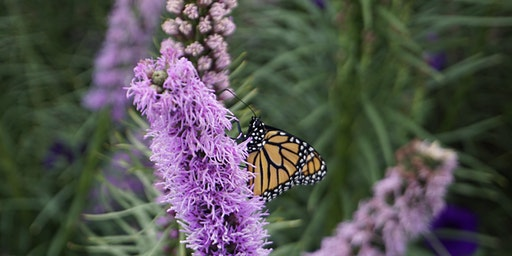 Native Plant Event - Learn From Experts & Order Native Plant Material