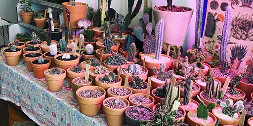 Intro to Cacti & Succulents Class