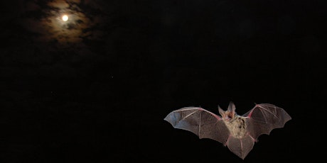 Microbats at Twilight in Elsternwick Park tickets