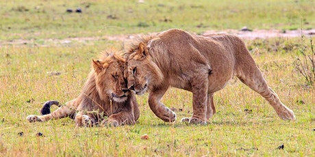 7 day trip to the Masai Mara game reserve tickets