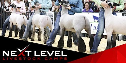 NEXT LEVEL SHOW SHEEP CAMP | February 8th/9th, 2020 | Buckeye, Arizona