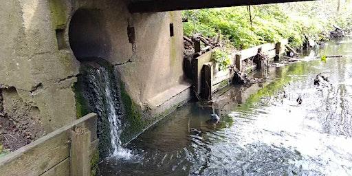 River Roding Outfall Safari - James Leal Centre