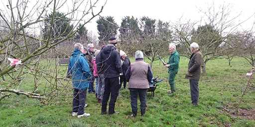 Apple Pruning Session (for JHCL volunteers)