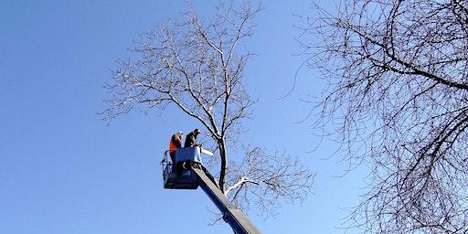 Ask an Arborist