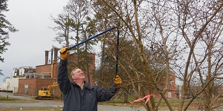 Pruning Shrubs and Trees - Saturday Class tickets