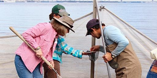 Ecotour Workshop: Marine Mammals (Beaufort/Hilton Head)