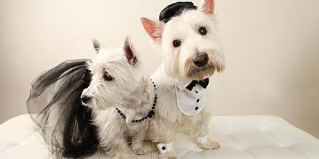 """A Terrier Affair"" A Fundraiser Gala for Wag N Train Terrier Rescue tickets"