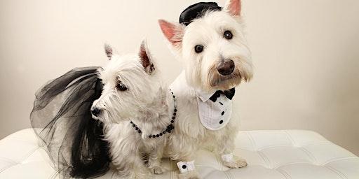 """""""A Terrier Affair"""" A Fundraiser Gala for Wag N Train Terrier Rescue"""