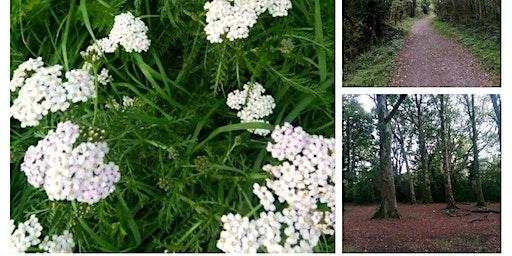 Wild Herb Tea Trail -Portlick MIllenium Forest