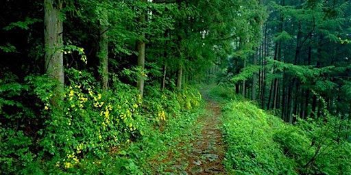 Foraging Walk:  Food Forests