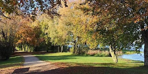 Wild Herb Tea Trail- The Golden Mile, Athlone