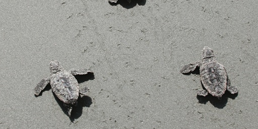 Walk with the turtles: Day Trip to Ossabaw Island