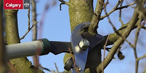 YYC Trees: Pruning Basics