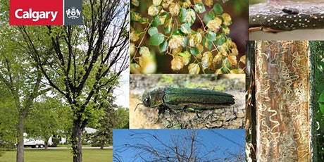 YYC Trees: Tree Pests & Disease tickets