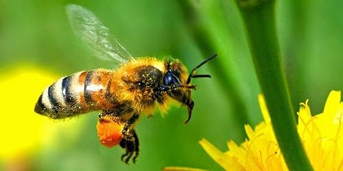Bee Wranglers Spring 2020 Beginning Beekeeping Class