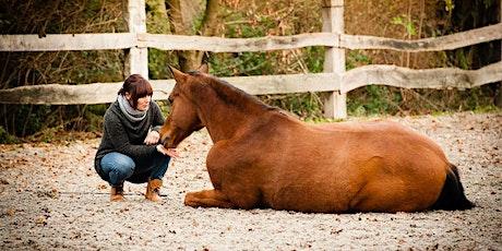 Gratis inspiratieavond Horseman's Paradise: De Ultieme blueprint voor een fantastische relatie met jouw paard tickets