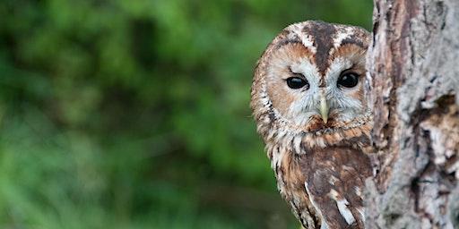 Bird Welfare, Tracking and Data Collection Seminar