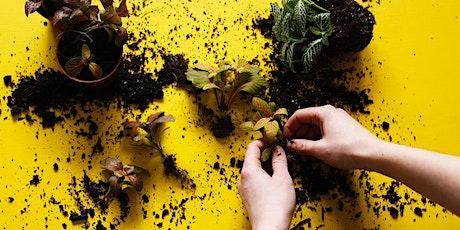 Demijohn Terrarium Workshop with London Terrariums tickets