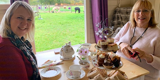 Afternoon Tea with Alpacas   New Forest   Southampton  Hampshire