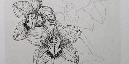 Atelier+ Botanische tekenen
