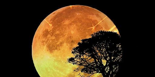 Nieuwe maan meditatie