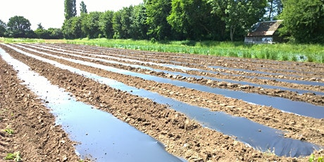 Reducing plastics in horticulture: Alternative mulches tickets