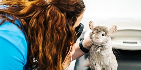Anaesthesia In Small Exotic Mammals tickets