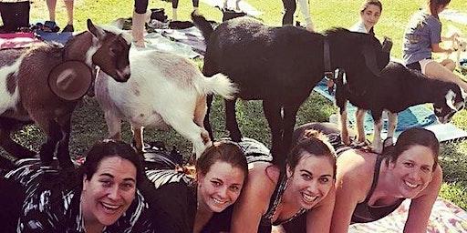 Goat Yoga Addison Circle!