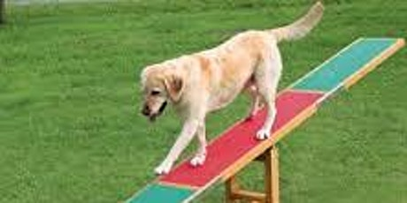 Beginners to Agility 6 Week Course tickets